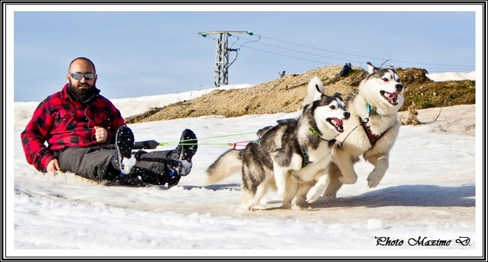 Huskys des neiges III (12 avril 2019)