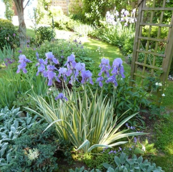 iris-de-jardin-Pallida-Variegata---juin-2013.jpg