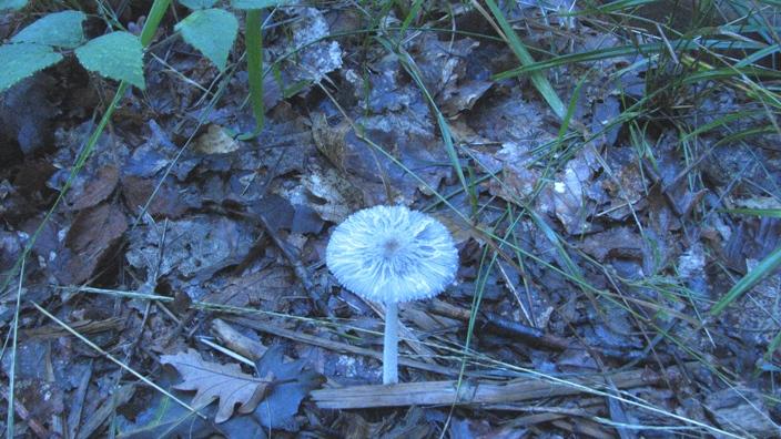champignon/à identifier