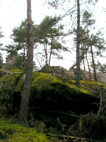 Soir d'hiver à Fontainebleau