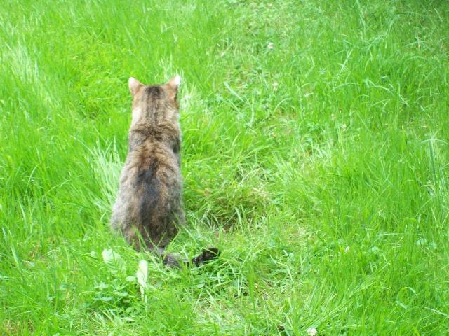 Pitoush médite dans le jardin ...