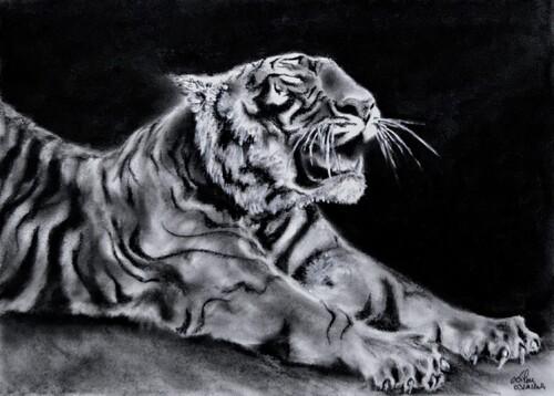 Le bâillement du tigre