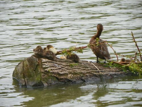 Le Parc des Oiseaux à Villars-les-Dombes ( 2 )