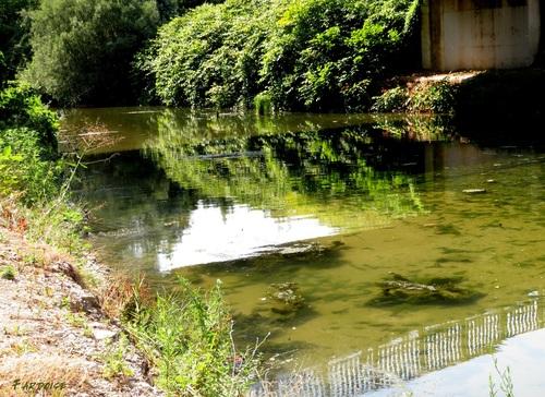Là où le Mialan rejoint le Rhône au coeur de l'été