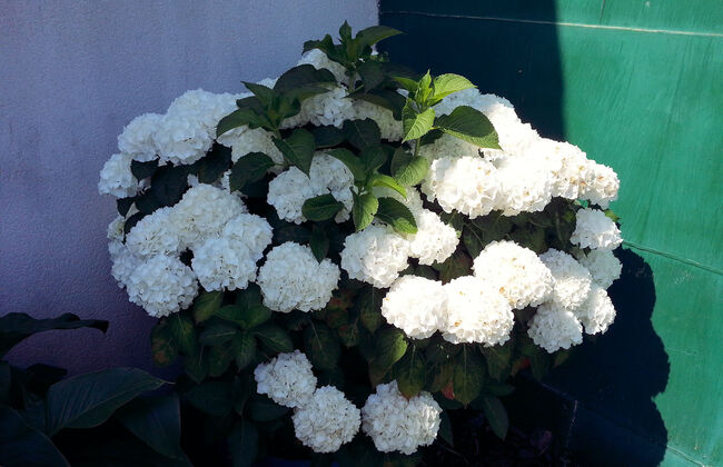 D'autres Fleurs habitent ce jardin ..