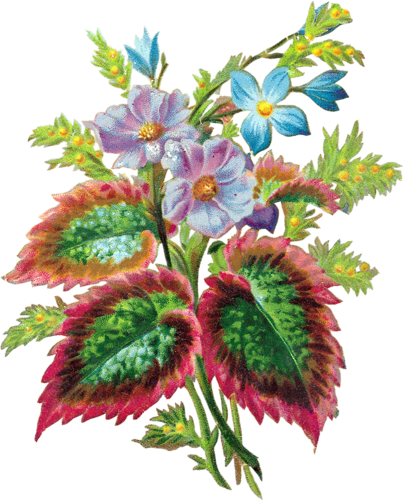 Fleurs Vintage Série 3