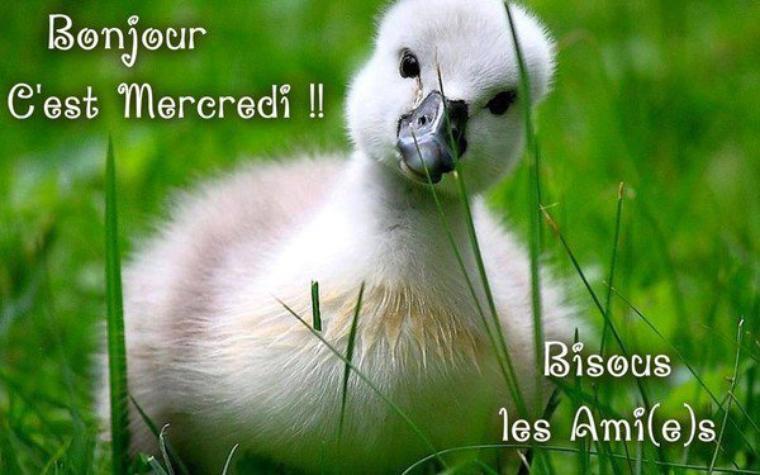BONJOUR  MES  AMIS  NOUS  SOMMES LE    MERCREDI  11   AVRIL  2018   C  EST LA ST  STANISLAS  .ET  A LA  ST  STANISLAS.....AU  POKER....UN CARRE  D AS    BRAVO  LOL