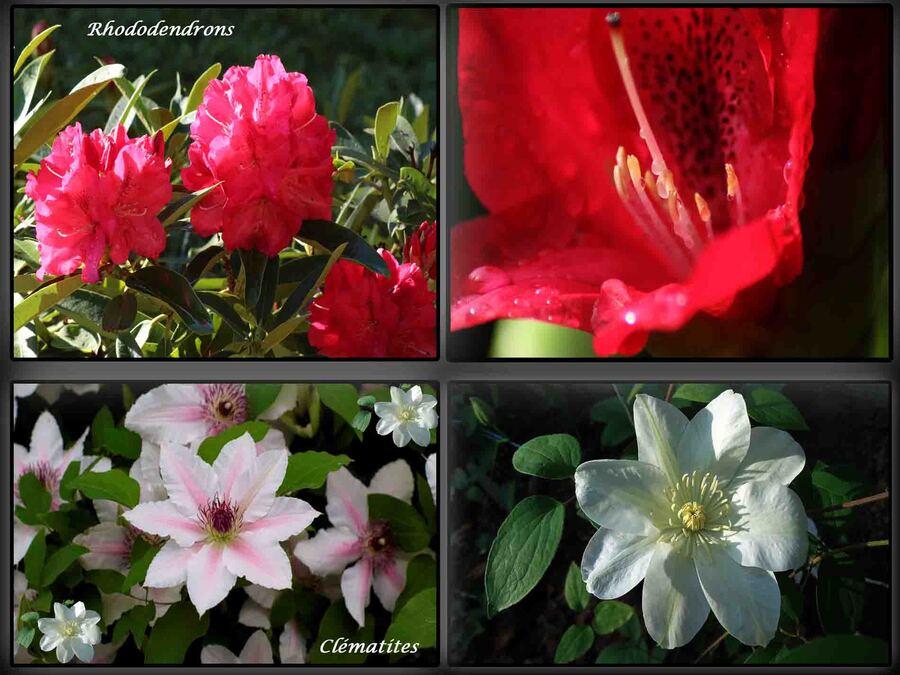 « Faune et Flore 1 »