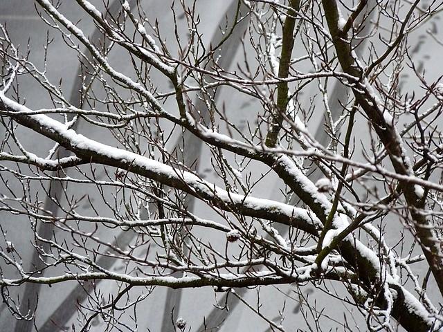 Neige à Metz 1 Marc de Metz 31 01 2012