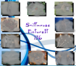 PictureIt 176 - Sniffmouse