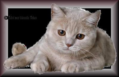 Tube chats - chatons 2984