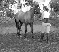 A cheval pour le 1er de l'an!
