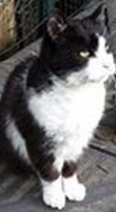 Mon chat Crésus
