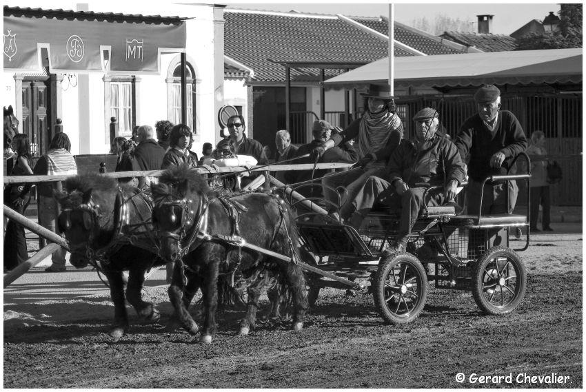 Feira nacional do cavalo - Golegã - Portugal #12