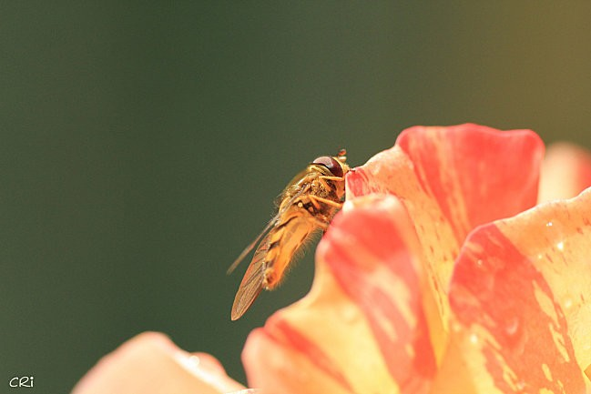 macros-insectes 2678