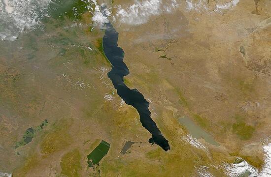 Les Cychlidés du lac Tanganyka