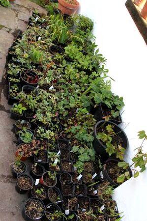 Le jardin comme exutoire (3)