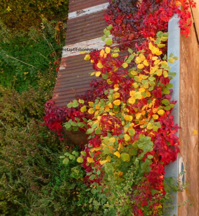Pinceaux d'automne...