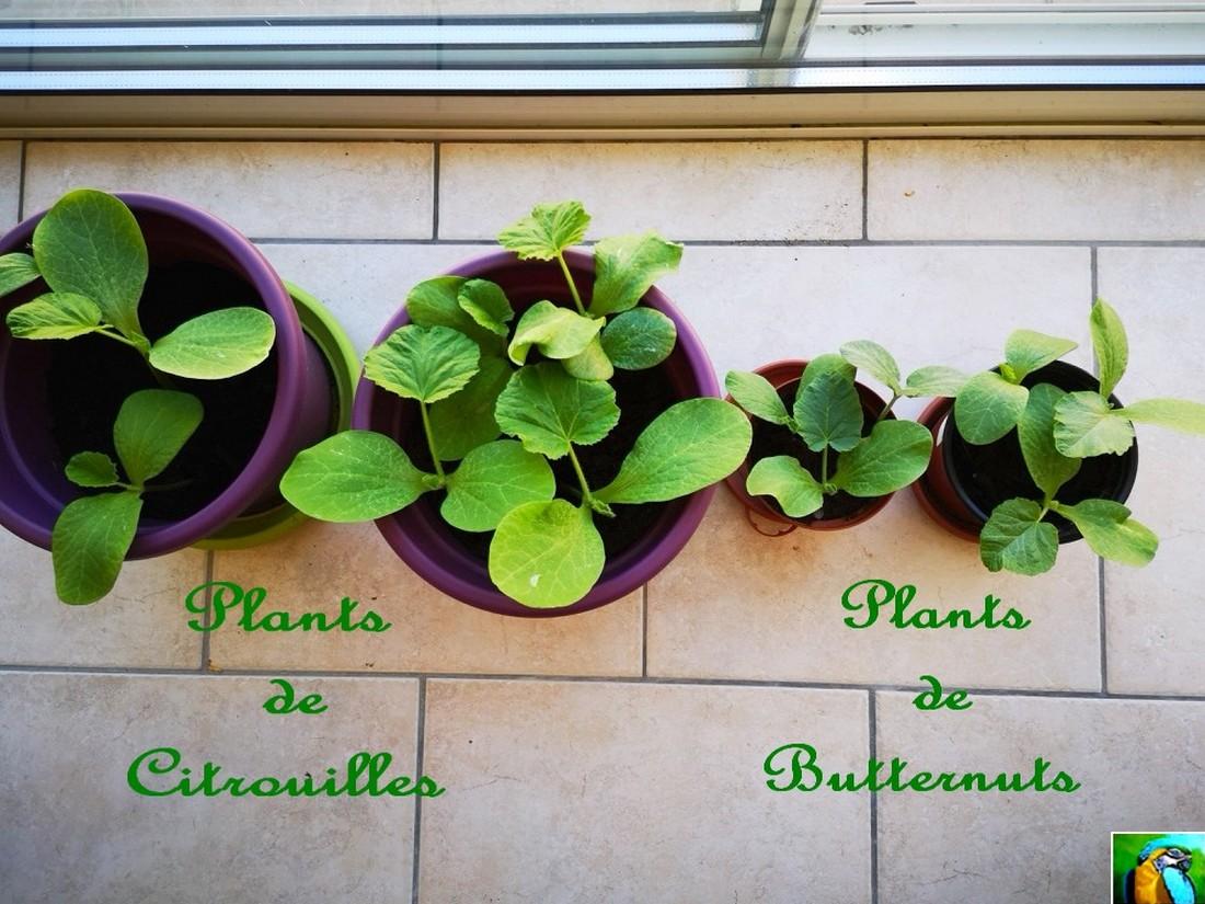 Je cultive !! Oui ! oui !