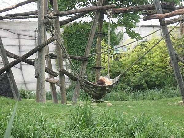 robe;Zoo de Beauval 27 juillet 2009 053