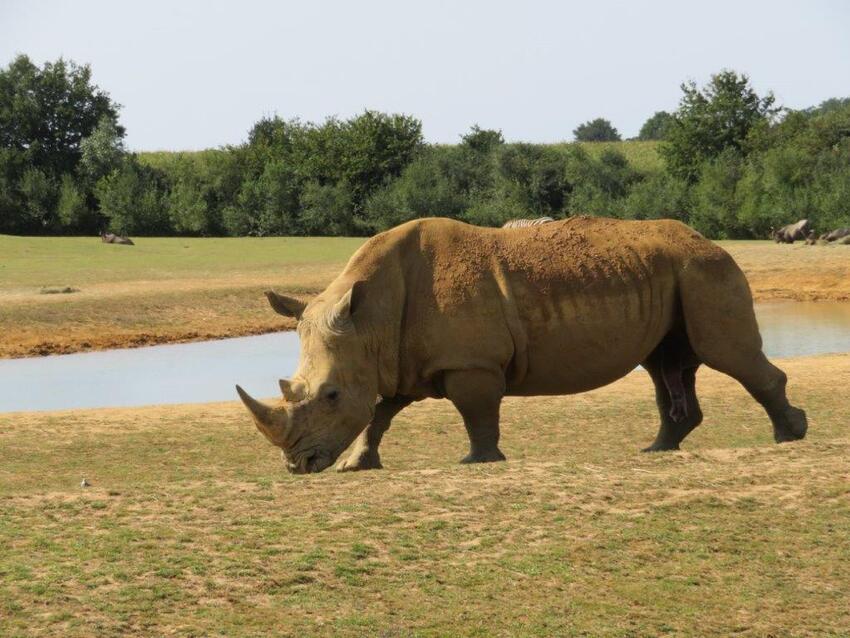 Le zoo de la Boissière du Doré - 3ème série