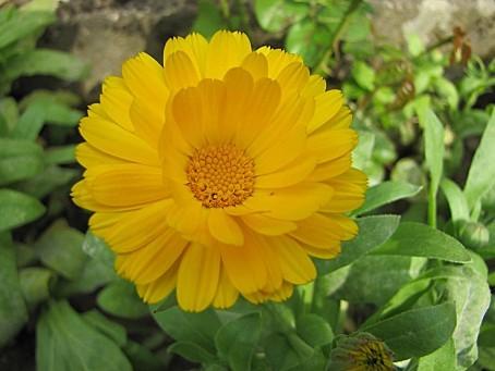 fleurs-6551.JPG