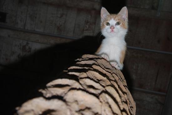 chaton09juilletm