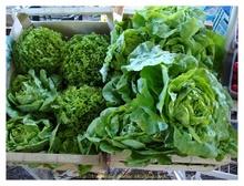 Légumes du Jardin du Pré Pichaud
