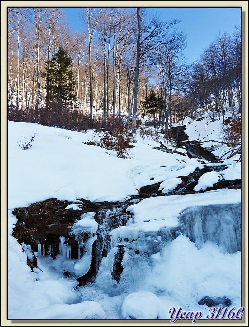 Le Rossignol dans la neige et la glace - La Oursatère - Paloumère - Milhas - 31