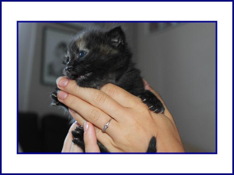 les chatons les 03 et 04 juillet 2014