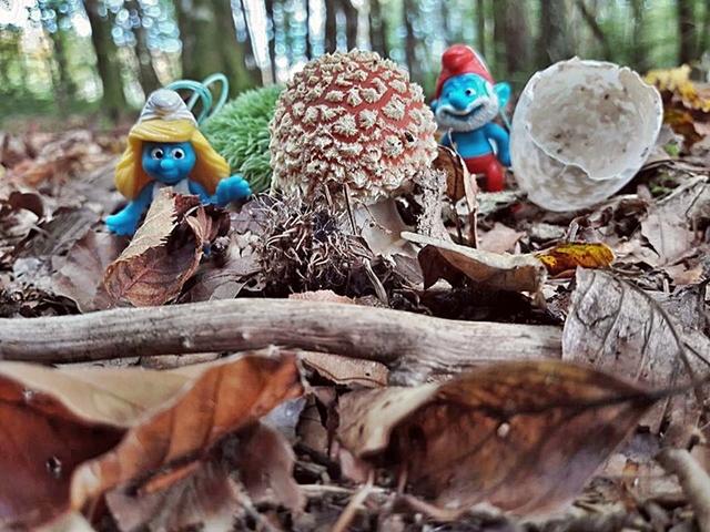 balade aux champignons