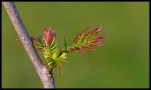 Le printemps est là ...