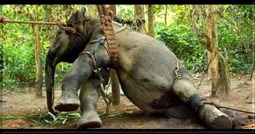 """éléphants ' il faut que ça cesse"""""""