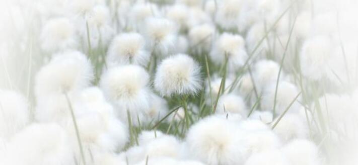http://www.avenuedessoeurs.com/wp-content/uploads/2015/04/coton-douceur-force.jpg