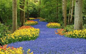 books park flowers tulips netherland park