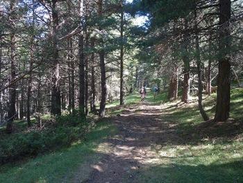 Le chemin des canons dans la forêt des Llançades