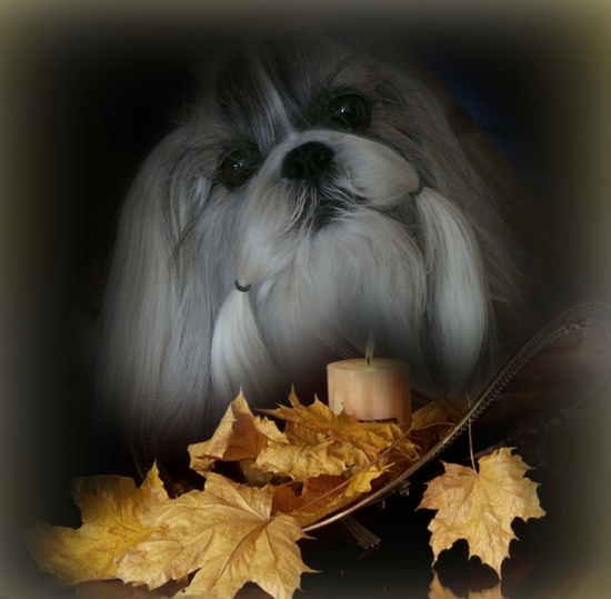 Autumn Beauté