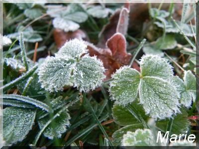 Photos de l'hiver