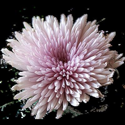 Fleurs Têtes