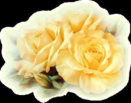 ♥ Rose d'or ♥