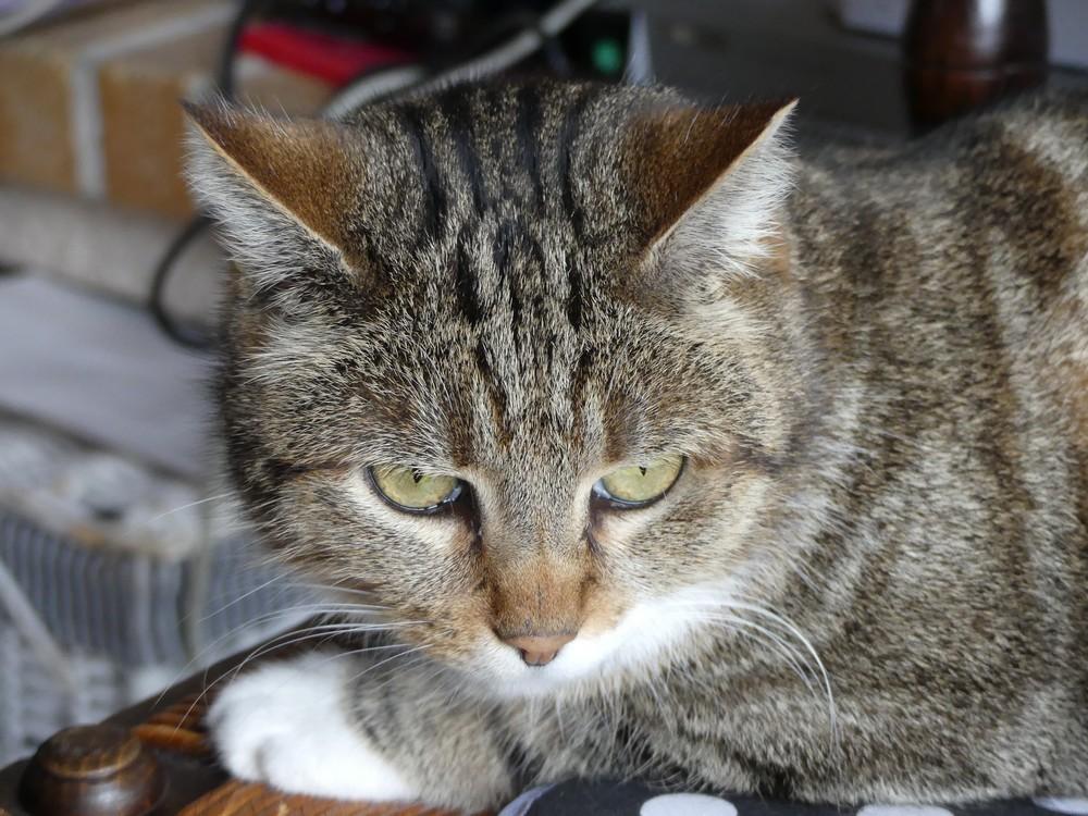 Le troisième chat...