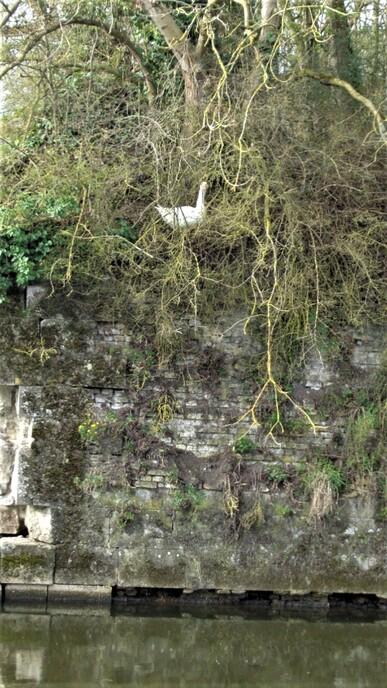 Bergues-bois des forts 19/03/19 : les photos
