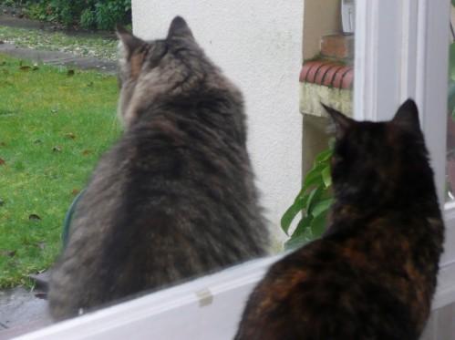 chats a la fenêtre 01
