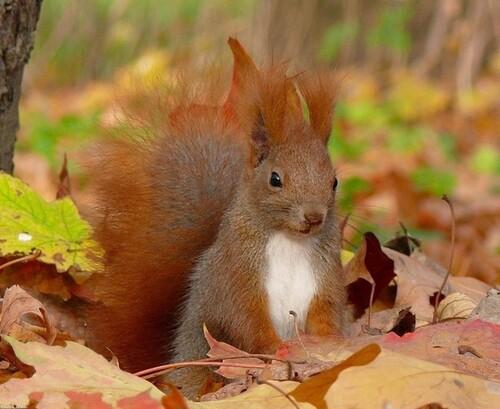L'automne et les animaux
