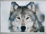 """Troisième exposé, celui de Lou """"Les loups"""""""