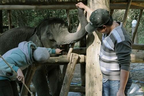 LAOS Eléphants en disparition