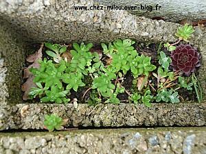 jardin mars 201008