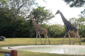 zoo 2601