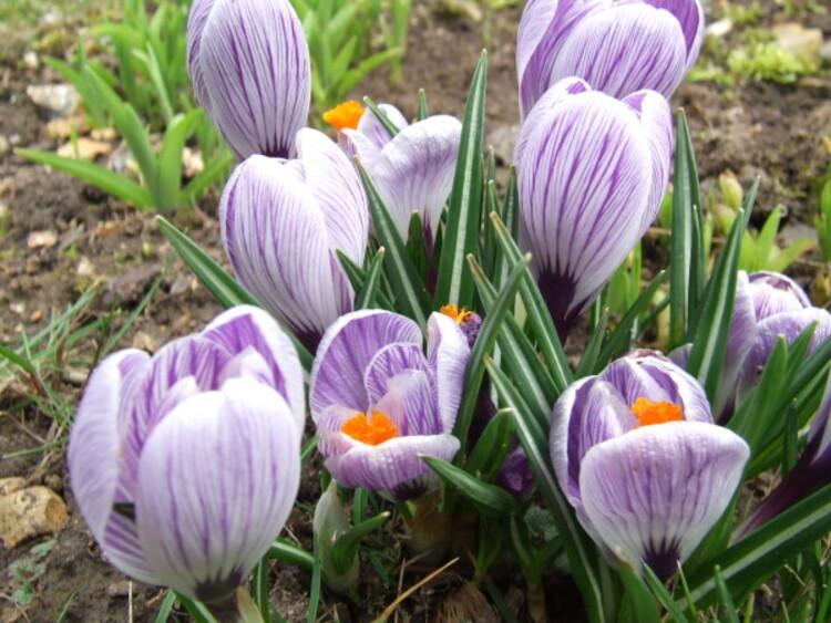 C'est le mois du printemps ..Qui arrive !!
