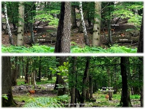 5 à 6 km dans le bois de Kabiline (étangs de Bicherel)